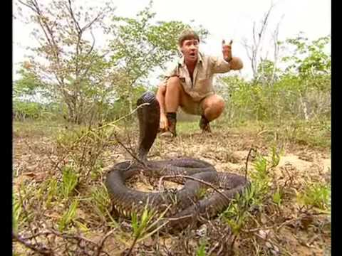 Africa s Deadliest Snakes Part 1