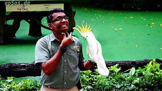 Funny Bird Show with Parrots in Singapore Bird Park.