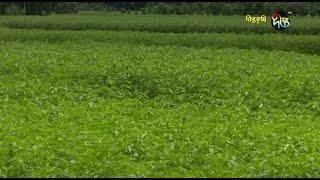 Deepto Krishi/দীপ্ত কৃষি -পাট চাষ/ফরিদপুর, পর্ব ১৯