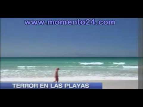 Sudáfrica Un tiburón blanco devoró a un turista
