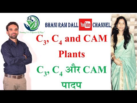 C3 C4 and CAM Plants C3 C4 और CAM पादप AFO AAO कृषि पर्यवेक्षक ICAR Pre PG