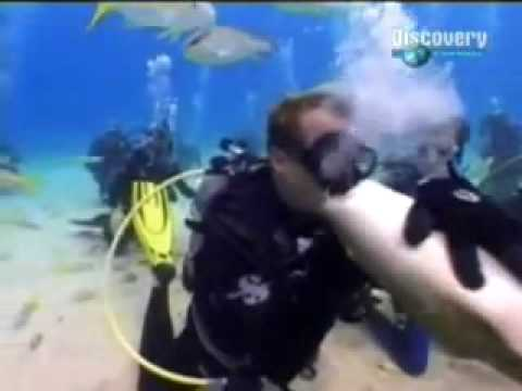 por besar a tiburon recibe un mortal mordisco beso. SANGRIENTO