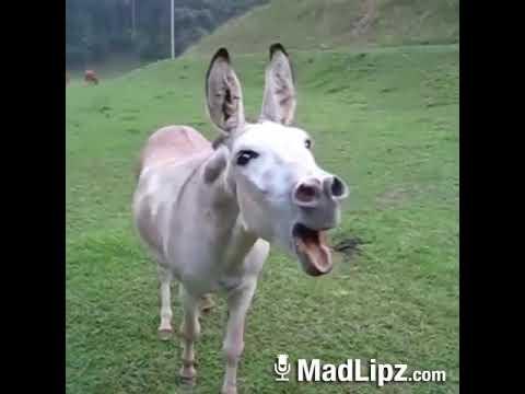 Xxx Mp4 Donkey Human 3gp Sex