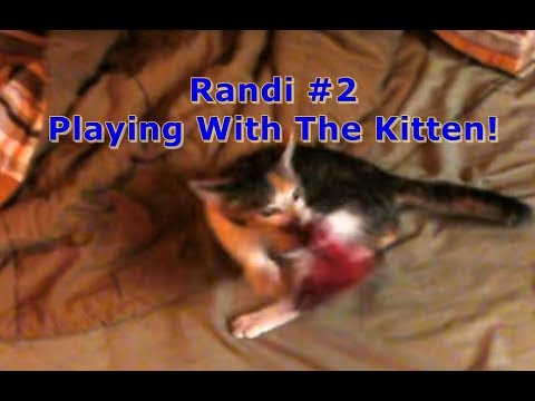 Xxx Mp4 Randi 2 Playing With The Kitten 3gp Sex
