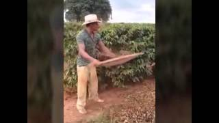 Videos engrassados do whatsap