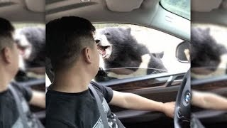 Black Bear Attacks Man at Beijing Wildlife Zoo