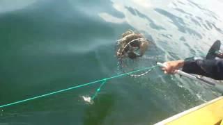 Pesca de Cangrejo Azul - Lago de Maracaibo