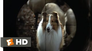 Lassie (8/9) Movie CLIP - They Are Not Your Sheep (1994) HD