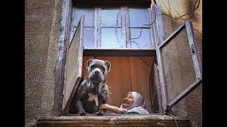 """هيرا وصاحبتها"""" قصة حب ووفاء بين الكلبة الشرسة والسيدة العجوز"""