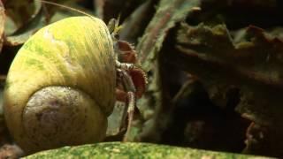 Hermit Crabs and Anemones