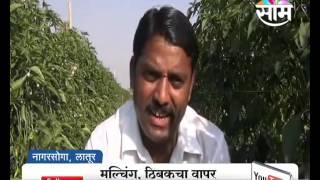 Agrowon: Latur based Dhanraj Suryawanshi's Success Story of Chilly Farming