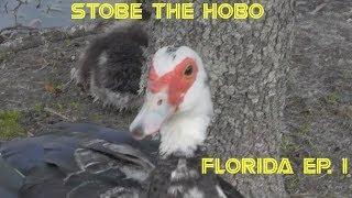 STOBE THE HOBO-FLORIDA#1-JAX, SARASOTA, ETC