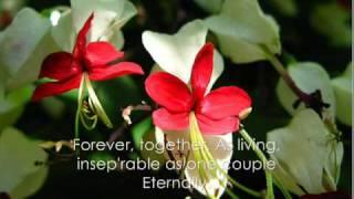 A Divine Romantic Story