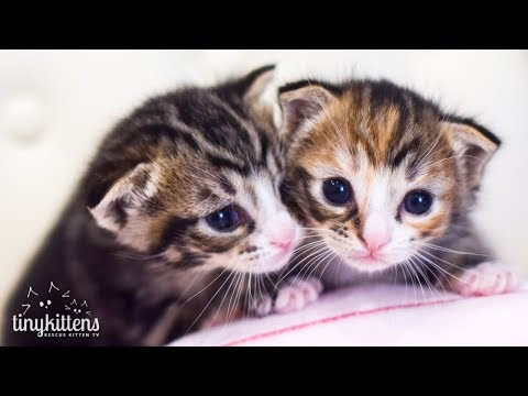 LIVE: Princess Consuela and her kittens!  TinyKittens.com