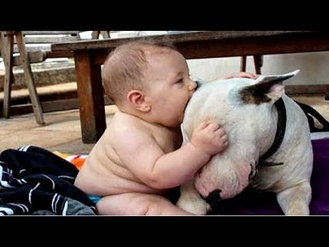 BABIES having FUN with DOGS Your CUTENESS and LAUGHING dose of the day