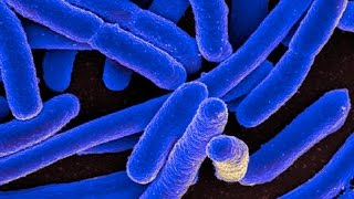 25 Bacteria Facts That Might Make You Feel Dirty