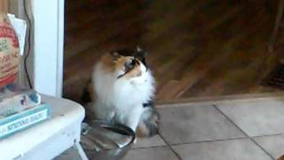 My friend Gwyn's kitty Madison multi-tasks while drinking (And washing her feet) . She cracks me up!