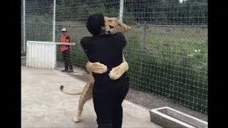 Un lion retrouve son maitre après 7 ans de séparation...
