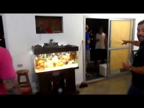 TV AQUARISMO JUMBO Episódio 12 Telmo Lopes.