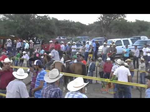 Carrera de Caballos Valparaíso Zacatecas Mayo 2014