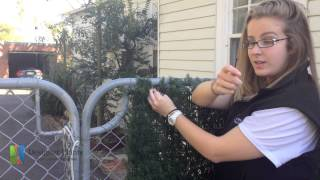 How to install artificial hedges to a cyclone fence?