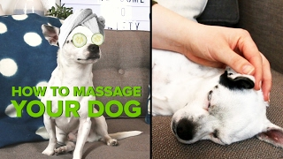 How To Give Your Dog The Best Massage Ever