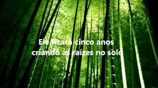 Vídeo Motivacional: A Samambaia e o Bambu