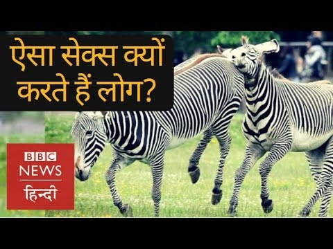 Why People have Sex with Animals? (BBC Hindi)