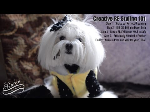 LIFE:  Maltese Creative RE-Styling 101 ~ PUPPY's MESSY GROOM