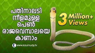 Vava Suresh Captures A large King Cobra | SNAKE MASTER