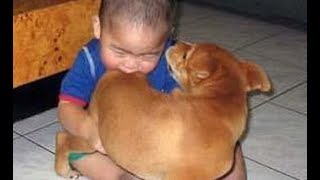 100% guaranteed that THESE DOGS will IMPROVE your MOOD - Funny DOG compilation