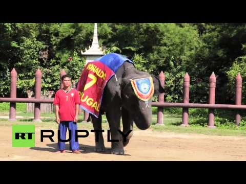 Xxx Mp4 Thailand Jumbo Queens Feed Elephants In Beauty Pageant 3gp Sex