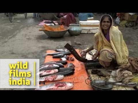 Woman sells fish at Nakhsa Chowk in Hajipur, Bihar