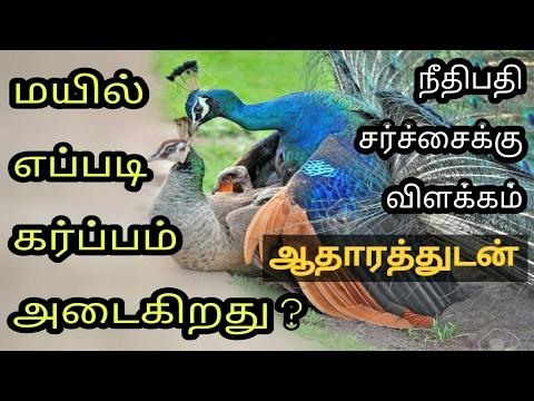 Peacock Sex Controversy - Rajasthan Judge / பெண் மயில் கர்ப்பம் அடைவது எப்படி ?