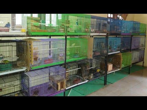 KANDANG TERNAK LOVEBIRD WARNA | ABDU SALAM BIRD FARM