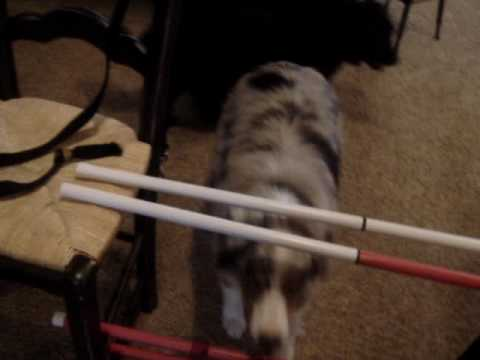 Max the Wonderdog Cheats