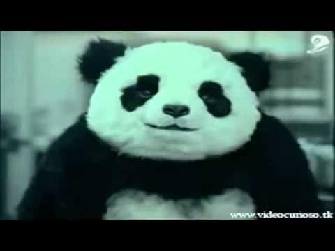 Nunca Diga não ao Panda Propaganda Engraçada