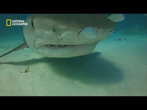 관광지에 숨어 있는 위험한 상어들