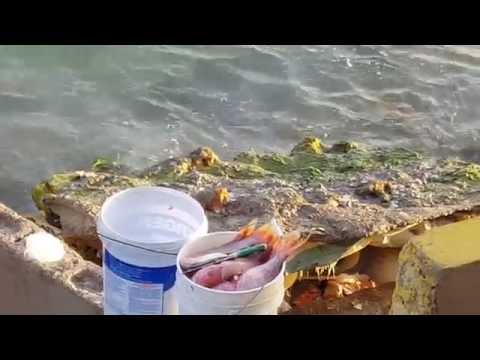 Jamaica Vlog 9 Road Trip to Hellshire Beach
