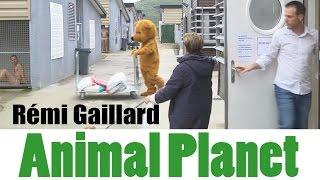 ANIMAL PLANET (REMI GAILLARD)