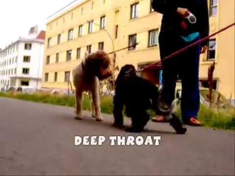 SEX DWARF CAUGHT ON CAMERA DEEP THROAT (1) (الحيوانات الجنس)