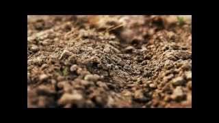 World Bank: No-Till Agriculture Prevents Soil Erosion
