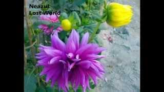 Haat Baralei Golap Debo - Rawshan Ara Mostafiz