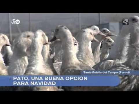 Aragon en Abierto granja de patos Santa Eulalia 051211.wmv