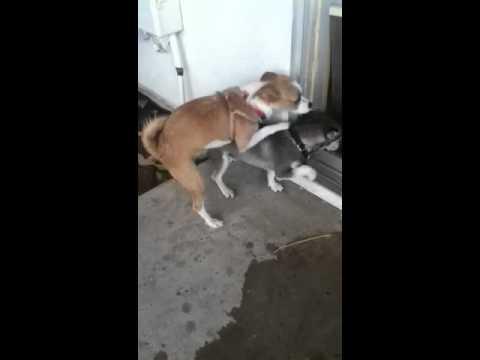 Xxx Mp4 Girl Dog Fu Ks Boy Dog 3gp Sex