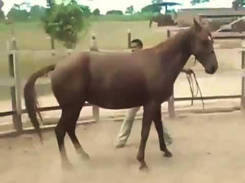 animal love Caballo Follando Horse reprodcution