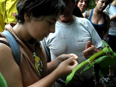 iria comiendo hormigas en el amazonas