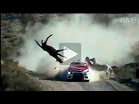 Accidente rally. Federico Villagra atropella a un caballo