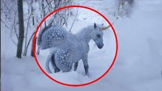 5 مقاطع يعتقد أنها تظهر الحصان المجنح الطائر في الواقع..!!