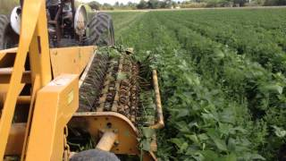 Pixall OXBO BH100 Harvesting Beans in South Florida